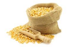 Yellow corn grain in a burlap bag Stock Image