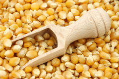 Yellow corn grain with a wooden scoop Stock Photography