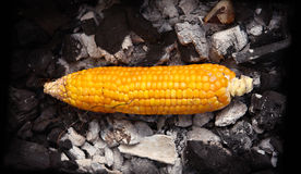 Yellow corn grilled on coals Stock Photography