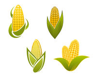Yellow corn icons and symbols Royalty Free Stock Image