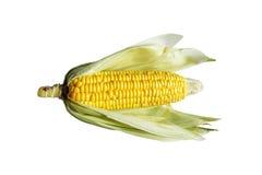 Yellow corn incrustation light green Fresh and natural Stock Photography