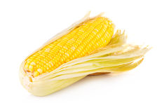 Yellow corn isolated on the white Royalty Free Stock Photo