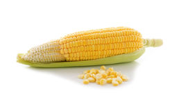 Yellow corn with leaf on white Stock Images