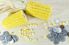 Yellow corn ready to eat on wood with euro sign and money coins Royalty Free Stock Photo