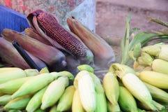Yellow corn and red corn Stock Photo