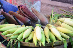 Yellow corn and red corn Royalty Free Stock Photo