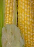 Yellow Corn skin pretty Stock Photo