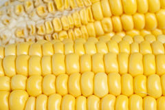 Yellow corn texture Royalty Free Stock Photos