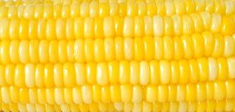 Yellow corn texture Stock Image