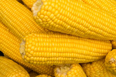 Yellow corn texture ,fresh prepared grain Royalty Free Stock Photography