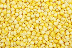 Yellow corn texture Royalty Free Stock Photography