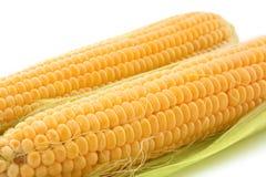 Yellow corns Royalty Free Stock Photos