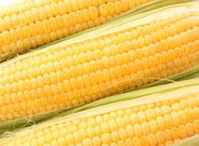 Yellow corns Royalty Free Stock Photo
