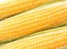 Yellow corns Royalty Free Stock Photo