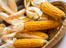 Yellow corns in the basket Royalty Free Stock Photos
