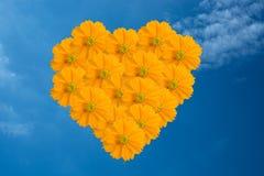 Yellow Cosmos flower as blue sky Stock Photos
