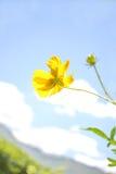 Yellow cosmos flower Family Composite Royalty Free Stock Photos