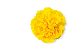 Yellow Cotton Tree flower Royalty Free Stock Photography