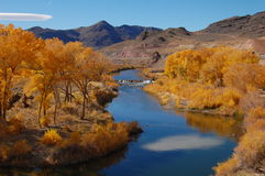 Yellow cottonwood trees in nevada by river. Yellow cottonwood trees along a river with mountains in the background in nevada Stock Photo