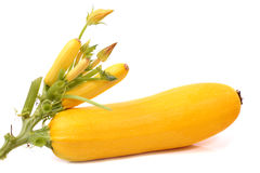 Yellow Courgettes. (zucchinis). White background Stock Photos