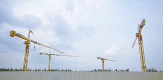 4 yellow crane Stock Image