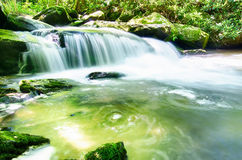 Yellow creek falls great smoky  mountains Royalty Free Stock Image