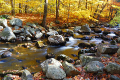 Yellow creek with rocks in forest Royalty Free Stock Photo
