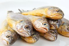 Yellow croaker Royalty Free Stock Photos
