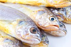 Yellow croaker Royalty Free Stock Photography