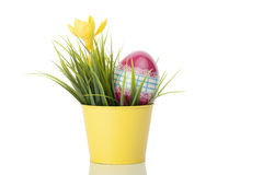 Yellow crocus flower with a decorated egg Stock Image