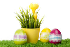 Yellow crocus flower with decorated eggs Stock Images