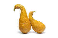 Yellow crookneck squashes Royalty Free Stock Image