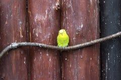 Yellow-crowned amazon at The Lagunas de Montebello National Park. Mexico Stock Photos