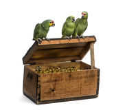 Yellow-crowned Amazon and a Red-lored amazon Royalty Free Stock Photography