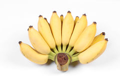 Yellow cultivated banana, Ripe cultivated banana. Yellow cultivated banana, Ripe cultivated banana call Kluai Nam Wa in Thai isolated on white background Stock Image