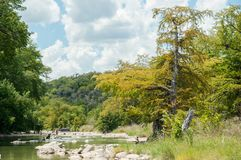 The yellow cypress tree on the river bank in the beginning of autumn with people in the river. Pedernales Falls National state par. K, Texas, USA stock images