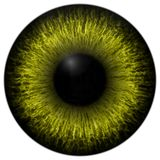 Yellow 3d texture eye with black fringe. And lines Royalty Free Stock Images