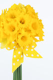 Yellow daffodil bouquet with bow Stock Images