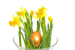 Yellow Daffodil flower with golden eater egg Stock Images