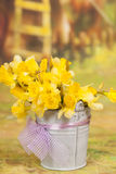 Yellow daffodil flowers in bucket Royalty Free Stock Images