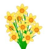 Yellow Daffodil Flowers Bunch Stock Photo