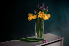 Yellow daffodil flowers with purple tulip blooming in vase with green wall. Royalty Free Stock Photos