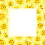 Yellow Daffodil - Narcissus Banner Card Border on White Background. Vector Illustration stock illustration