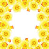 Yellow Daffodil - Narcissus Border on White Background. Vector Illustration.  Stock Images