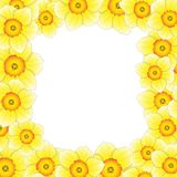 Yellow Daffodil - Narcissus Flower Border. Vector Illustration.  Stock Photography
