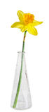 Yellow daffodil, narcissus flower, transparent bottle, close up, Stock Photos