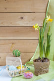 Yellow daffodil (narcissus) and in pot and handmade Happy Easter eggs on a light wooden background Royalty Free Stock Images