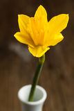 Yellow daffodil in vase Stock Image