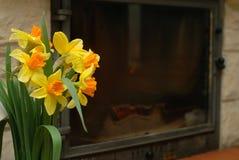 Yellow daffodils Royalty Free Stock Photo