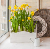 Yellow daffodils in balcony boxes for flowers Stock Image